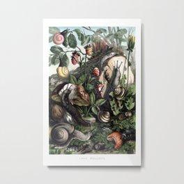 Land Molluscs Metal Print