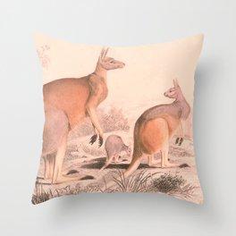 Vintage Kangaroo Family Illustration (1849) Throw Pillow