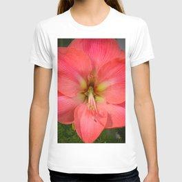 Amaryllis by Teresa Thompson T-shirt