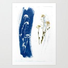 Solar Herbalism #3 Art Print