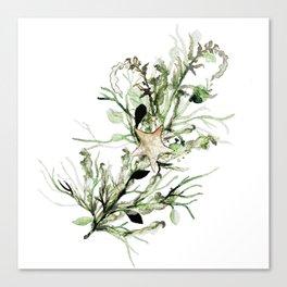 Waterwheel Plant Canvas Print