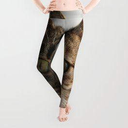 Beautiful Eyed Tabby Cat  Leggings