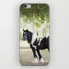 Majestic Horse in Color iPhone Skin