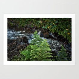 Ferns, Wahkeenah Falls, Columbia River Valley, Portland, Oregon Art Print