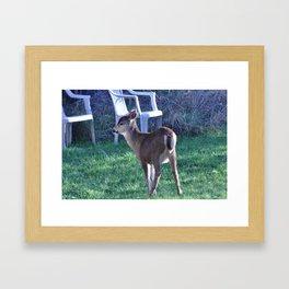 Young Columbian Black-Tailed Deer 4 Framed Art Print