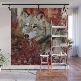 Wolf in red foliage Wall Mural