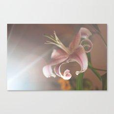 lilium Canvas Print