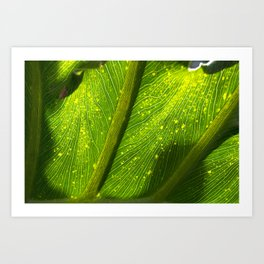 Spotted Leaf Art Print