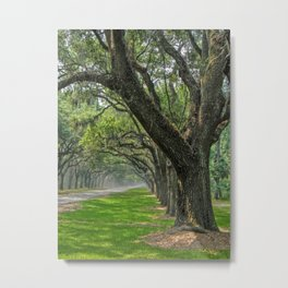 Avenue of Oaks Metal Print
