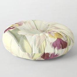 Cattleya candida (as Cattleya quadricolor) Curtis' 91 (Ser. 3 no. 21) pl. 5504 (1865) Floor Pillow