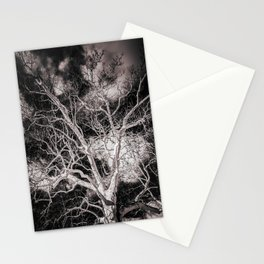 American Sycamore Plantanus Occidentalis Morgantown West Virginia Black and White Stationery Cards