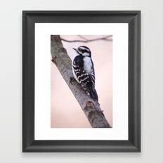Downy Woodpecker Framed Art Print