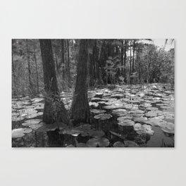 Pads, Okefenokee National Wildlife Refuge Canvas Print