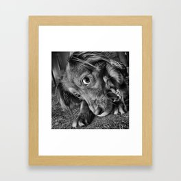 Dog playing with his ball Framed Art Print