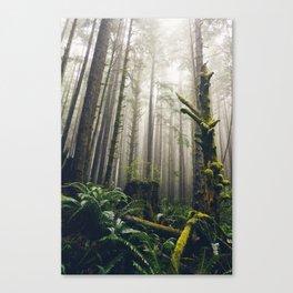 Rainforest Fog Canvas Print