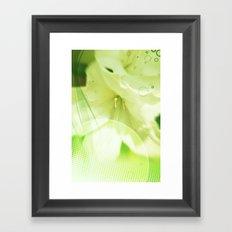 Spring lily Framed Art Print