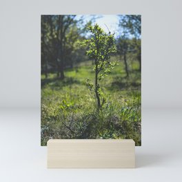 Tiny Tree in the Forest Mini Art Print