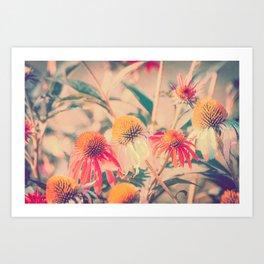 Summer Cone Flowers Echinacea Scenic Botanical Art Print