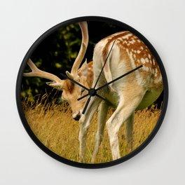 Wild Fallow Deer Wall Clock