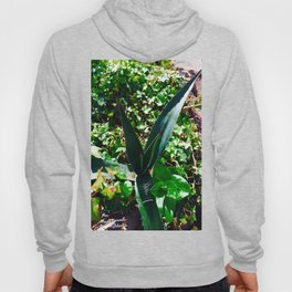 Aloe Vera at the top of Mount Monserrate in Bogota, Colombia Hoody