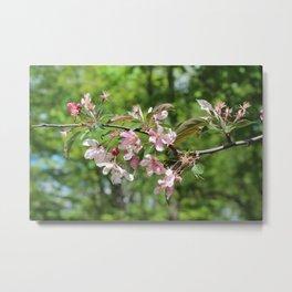 Light Pink Crab Apple Tree Branch Metal Print