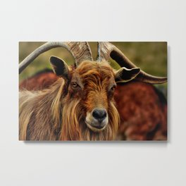 Billy Goat Metal Print