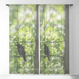 Black Bird Summer Green Tree Sheer Curtain