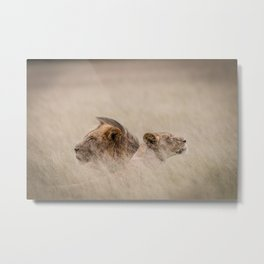 Male & female Lion in the grass Metal Print