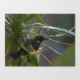 Sprinkler Relief from the Summer Heat Canvas Print