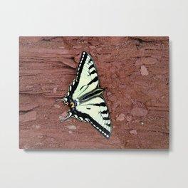 Canadian Tiger Swallowtail Metal Print