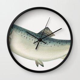 The California salmon (ca 1879) by Samuel Kilbourne Wall Clock