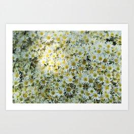 White Daises Art Print