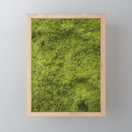 Moss Framed Mini Art Print