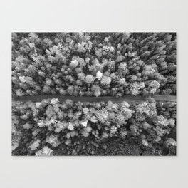 The Forest (Black and White) Canvas Print