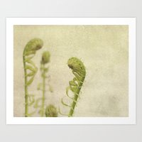fern Art Prints featuring Fern by Pure Nature Photos