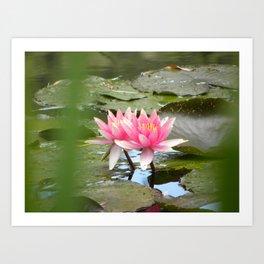 Monet's Water Lillies Art Print