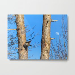 Day Moon Squirrel Metal Print