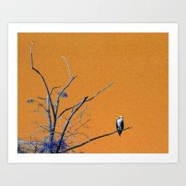 Watching You Like A Hawk Art Print