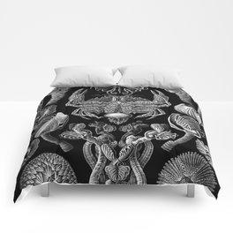 Ernst Haeckel Cirripedia Barnacles Crabs Comforters