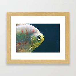 One Fish Framed Art Print