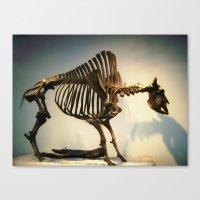 buffalo Canvas Prints featuring Buffalo by Mandy Chesnut