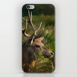 Stag In Morning Sunshine iPhone Skin