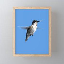 Juvenile Ruby-Throated Hummingbird Framed Mini Art Print