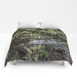 Fern Covered Coastal Cliff Face Comforters