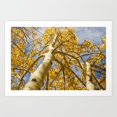 Aspens Above in Autumn Art Print