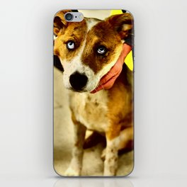 Dog Eyes iPhone Skin