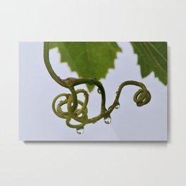 grape leaves in the raindrops Metal Print