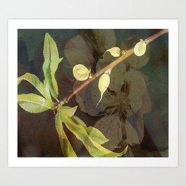 """ Peach Blossom Medley "" Art Print"