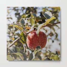 Autumn Apple III Metal Print