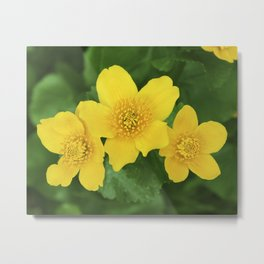 Marsh Marigold Caltha Palustris Metal Print